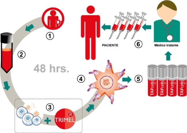 Oncobiomed-Melanoma-Prostata-Elaboracion-Tratamiento-Terapia-Inmunoterapia-Cancer-Tapcells